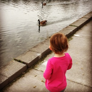 looking at the ducks