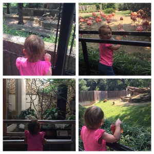 Checking out the animals