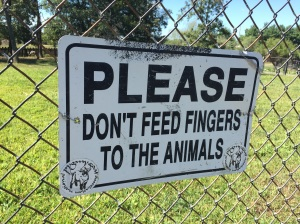 Petting Zoo Fun