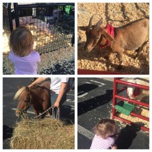 Agricultural Fair.